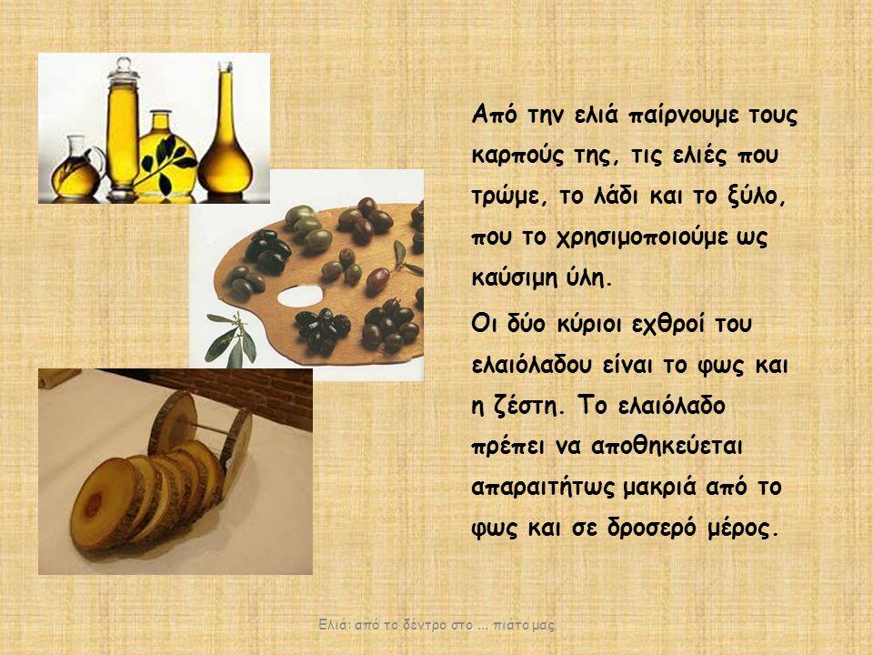 Από την ελιά παίρνουμε τους καρπούς της, τις ελιές που τρώμε, το λάδι και το ξύλο, που το χρησιμοποιούμε ως καύσιμη ύλη.