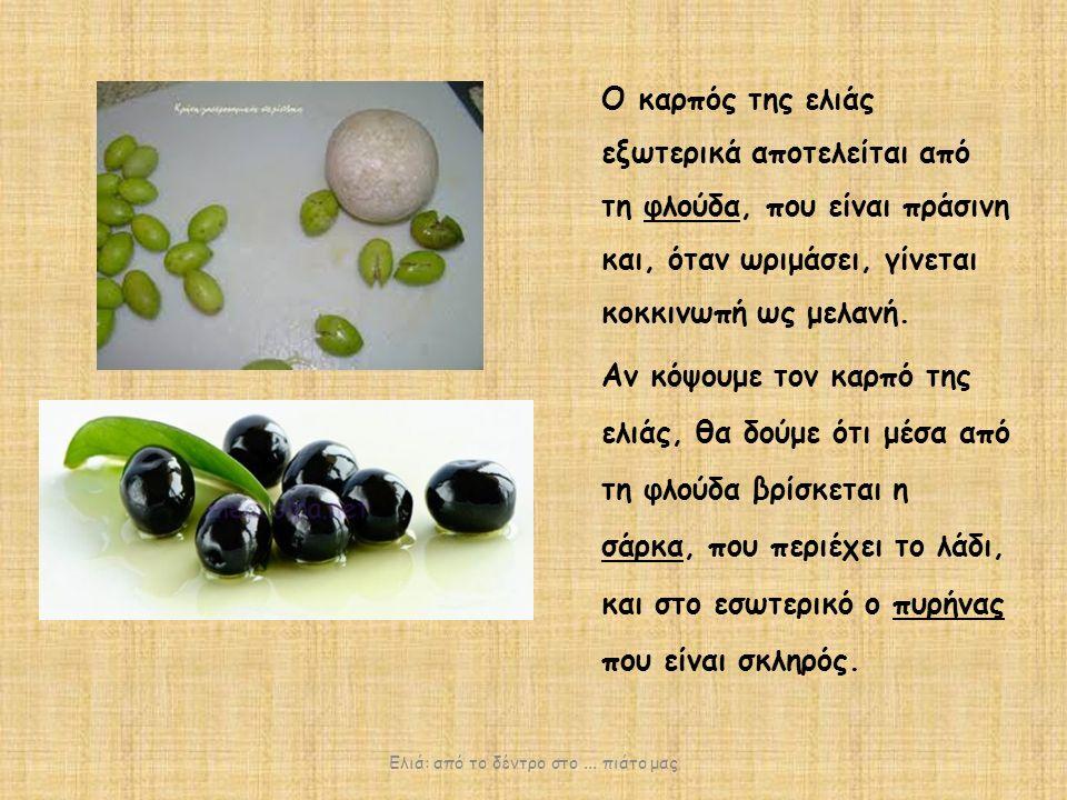 Ο καρπός της ελιάς εξωτερικά αποτελείται από τη φλούδα, που είναι πράσινη και, όταν ωριμάσει, γίνεται κοκκινωπή ως μελανή.