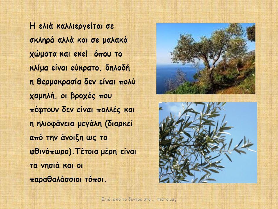 Ελαιώνες υπάρχουν κυρίως στη νότια Ελλάδα και στα νησιά, αν και ελιές συναντάμε και στις υπόλοιπες περιοχές της πατρίδας μας.