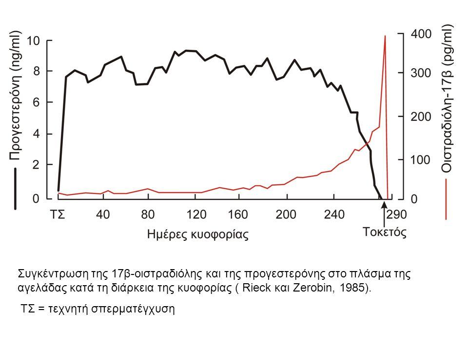 Συγκέντρωση της 17β-οιστραδιόλης και της προγεστερόνης στο πλάσμα της αγελάδας κατά τη διάρκεια της κυοφορίας ( Rieck και Zerobin, 1985). TΣ = τεχνητή
