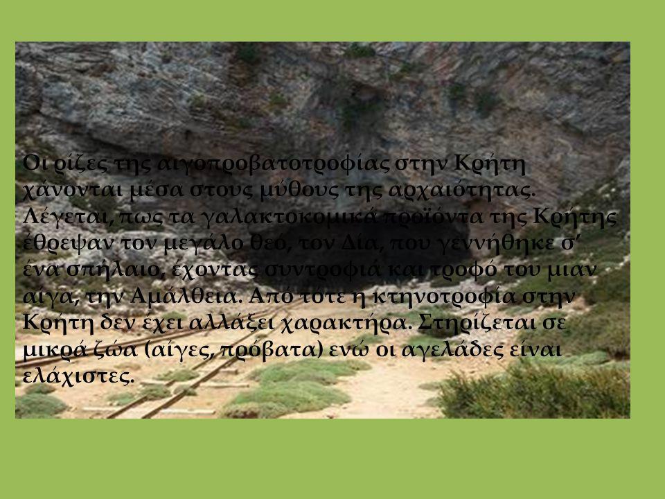Οι ρίζες της αιγοπροβατοτροφίας στην Κρήτη χάνονται μέσα στους μύθους της αρχαιότητας. Λέγεται, πως τα γαλακτοκομικά προϊόντα της Κρήτης έθρεψαν τον μ