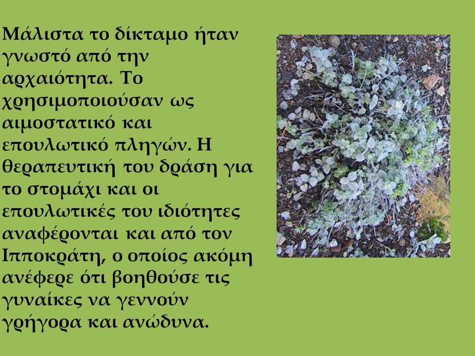 Μάλιστα το δίκταμο ήταν γνωστό από την αρχαιότητα. Το χρησιμοποιούσαν ως αιμοστατικό και επουλωτικό πληγών. Η θεραπευτική του δράση για το στομάχι και