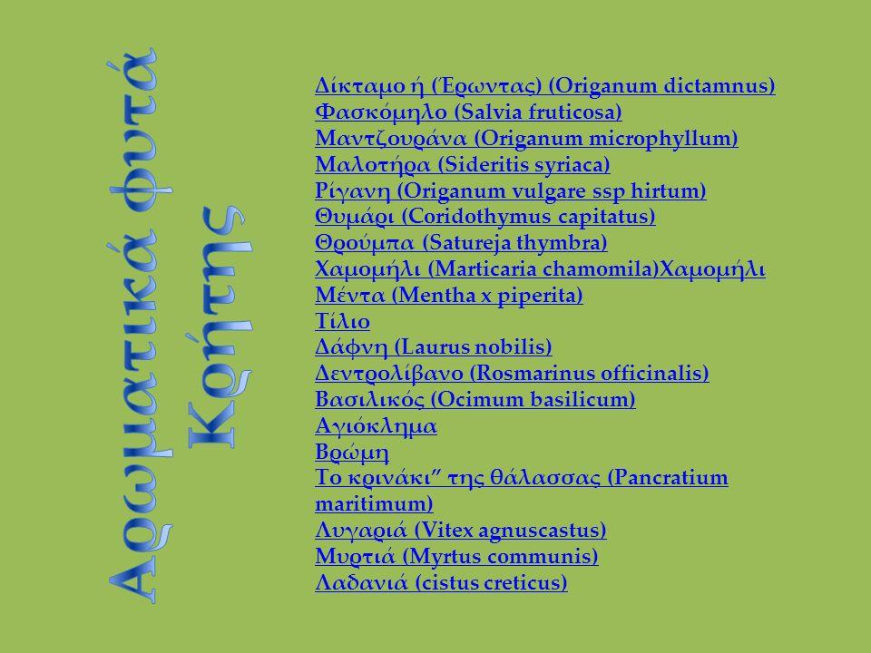 Δίκταμο ή (Έρωντας) (Origanum dictamnus) Φασκόμηλο (Salvia fruticosa) Μαντζουράνα (Origanum microphyllum) Μαλοτήρα (Sideritis syriaca) Ρίγανη (Origanum vulgare ssp hirtum) Θυμάρι (Coridothymus capitatus) Θρούμπα (Satureja thymbra) Χαμομήλι (Marticaria chamomila)Χαμομήλι Μέντα (Mentha x piperita) Τίλιο Δάφνη (Laurus nobilis) Δεντρολίβανο (Rosmarinus officinalis) Βασιλικός (Ocimum basilicum) Αγιόκλημα Βρώμη Το κρινάκι της θάλασσας (Pancratium maritimum) Λυγαριά (Vitex agnuscastus) Μυρτιά (Myrtus communis) Λαδανιά (cistus creticus)