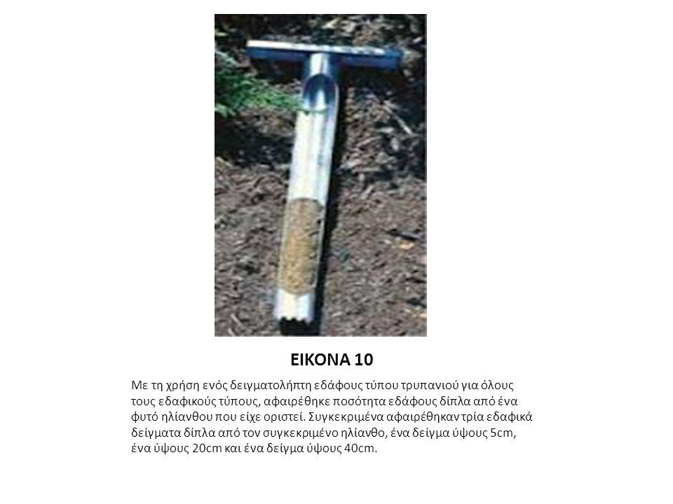 ΕΙΚΟΝΑ 10 Με τη χρήση ενός δειγματολήπτη εδάφους τύπου τρυπανιού για όλους τους εδαφικούς τύπους, αφαιρέθηκε ποσότητα εδάφους δίπλα από ένα φυτό ηλίανθου που είχε οριστεί.
