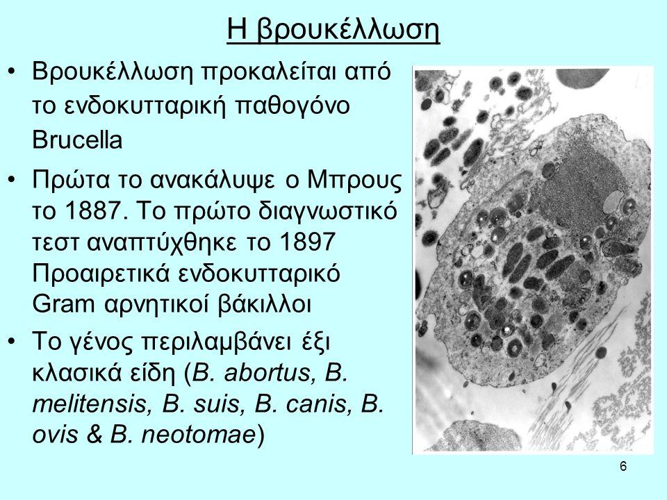 6 Η βρουκέλλωση Βρουκέλλωση προκαλείται από το ενδοκυτταρική παθογόνο Brucella Πρώτα το ανακάλυψε ο Μπρους το 1887. Το πρώτο διαγνωστικό τεστ αναπτύχθ