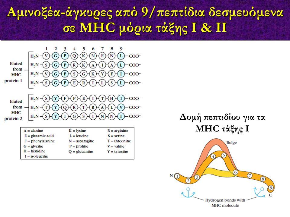 Αμινοξέα-άγκυρες από 9/πεπτίδια δεσμευόμενα σε MHC μόρια τάξης Ι & ΙΙ Δομή πεπτιδίου για τα MHC τάξης Ι