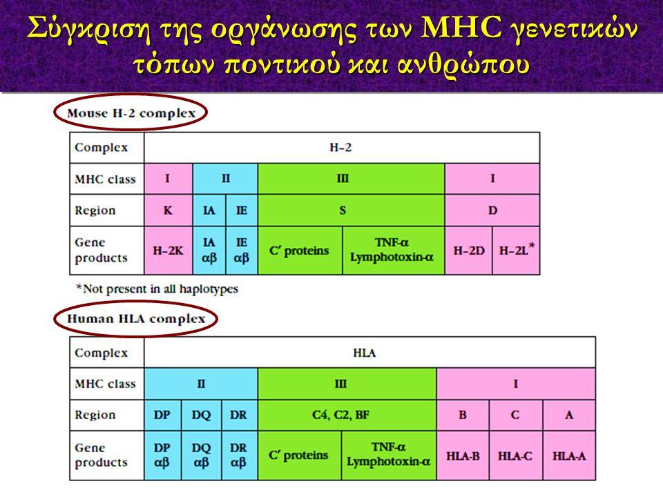 Σύγκριση της οργάνωσης των MHC γενετικών τόπων ποντικού και ανθρώπου