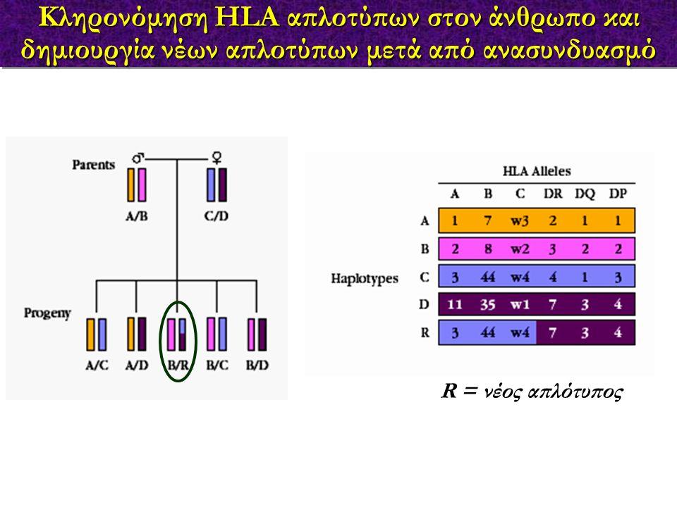 Κληρονόμηση HLA απλοτύπων στον άνθρωπο και δημιουργία νέων απλοτύπων μετά από ανασυνδυασμό R = νέος απλότυπος