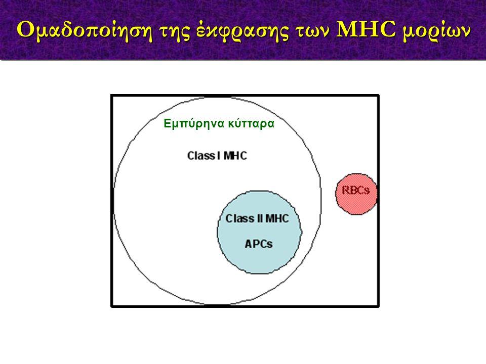 Εμπύρηνα κύτταρα Ομαδοποίηση της έκφρασης των MHC μορίων