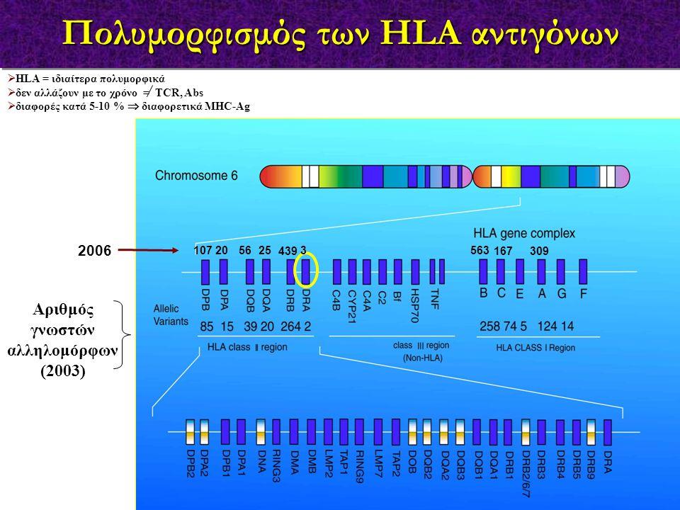 Αριθμός γνωστών αλληλομόρφων (2003)  HLA = ιδιαίτερα πολυμορφικά  δεν αλλάζουν με το χρόνο = TCR, Abs  διαφορές κατά 5-10 %  διαφορετικά MHC-Ag 30