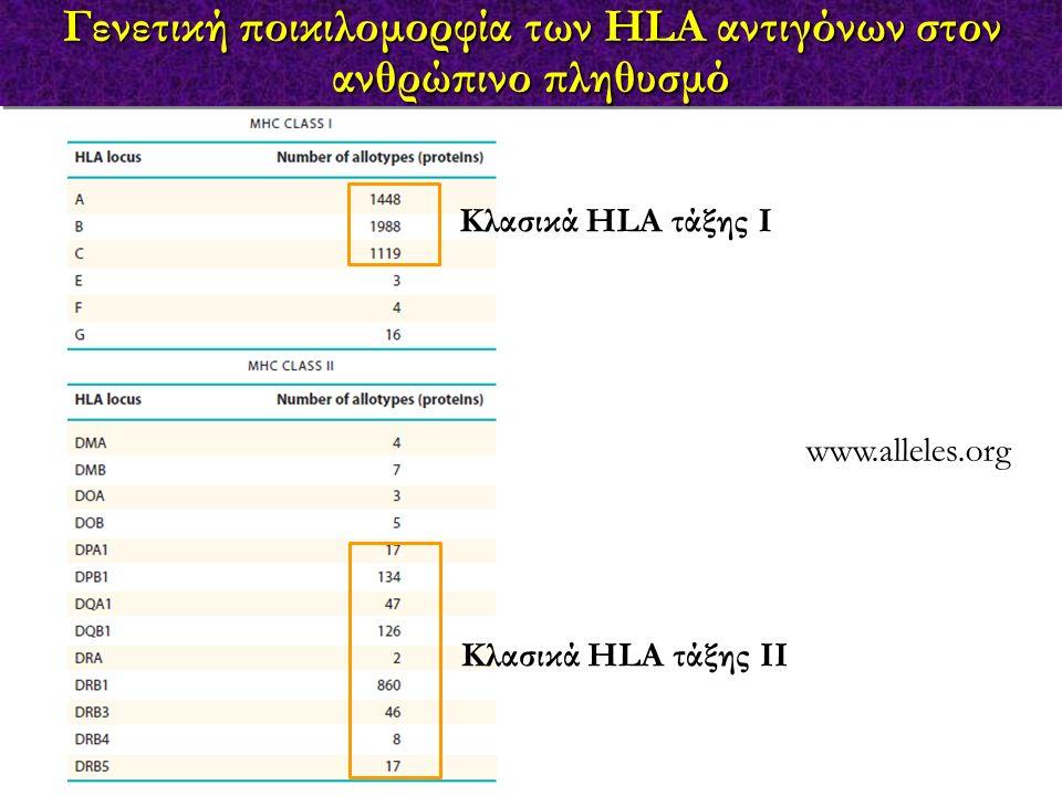 Γενετική ποικιλομορφία των HLA αντιγόνων στον ανθρώπινο πληθυσμό www.alleles.org Κλασικά HLA τάξης Ι Κλασικά HLA τάξης ΙΙ