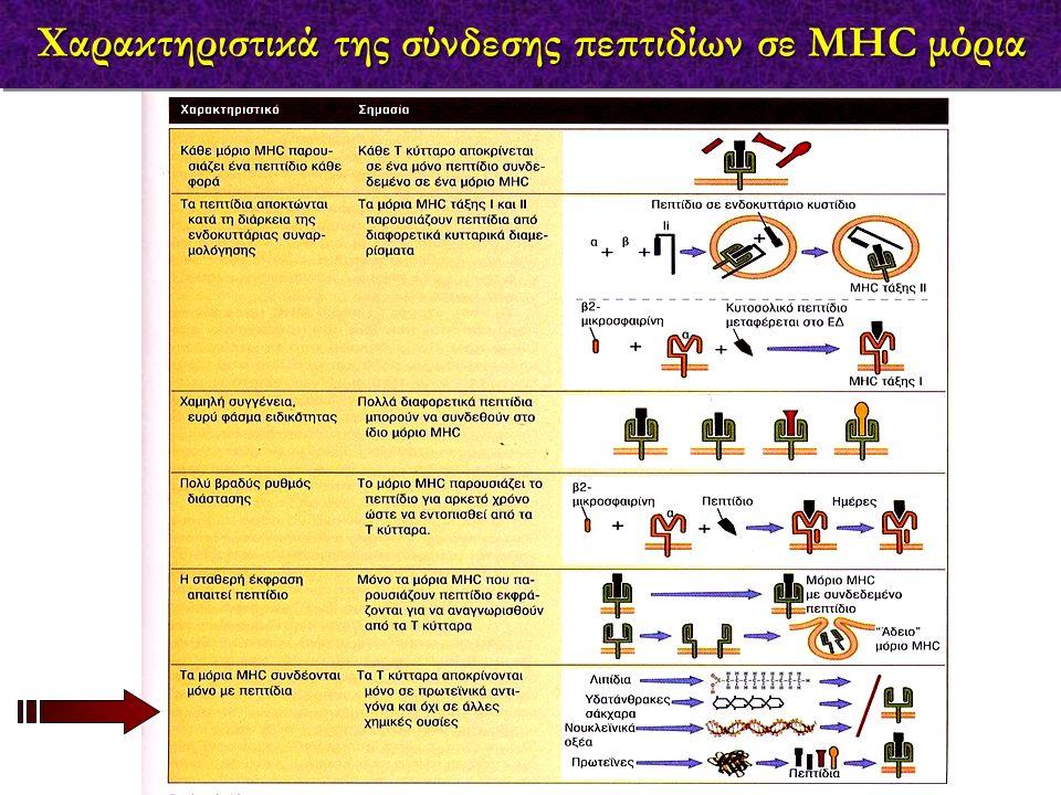 Χαρακτηριστικά της σύνδεσης πεπτιδίων σε MHC μόρια