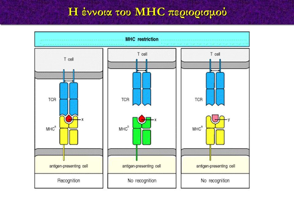 Η έννοια του MHC περιορισμού