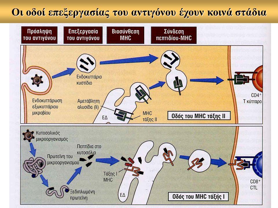 Οι οδοί επεξεργασίας του αντιγόνου έχουν κοινά στάδια