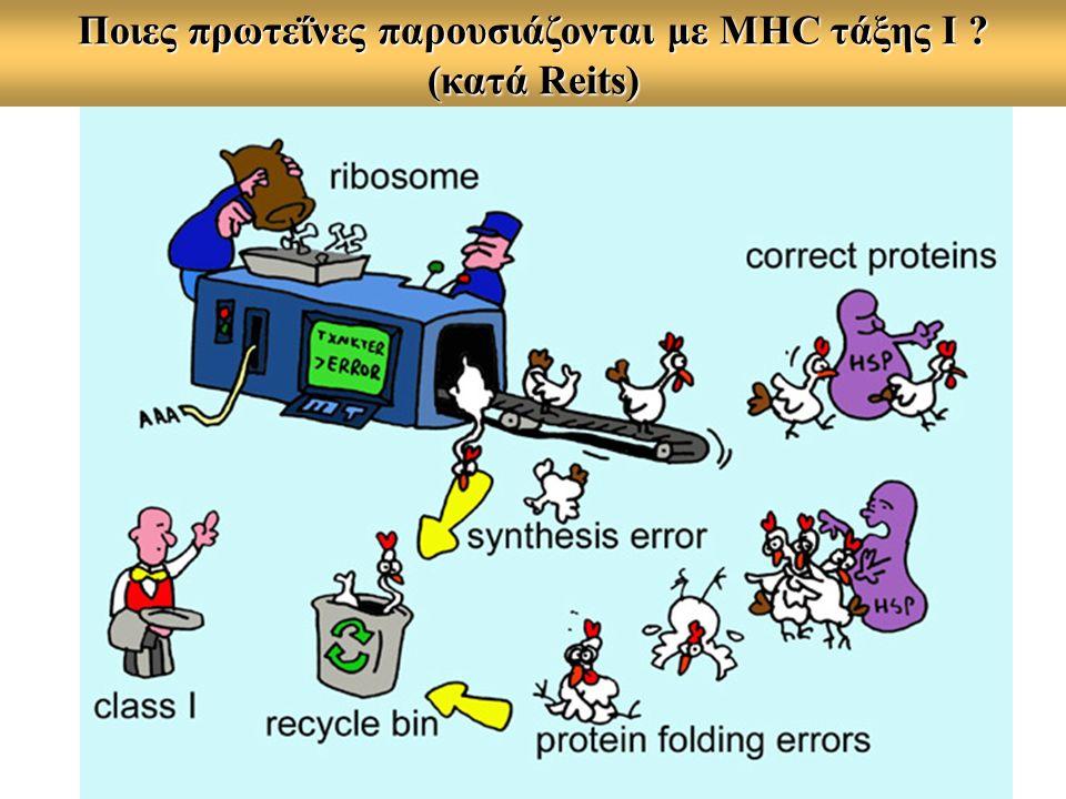 Ποιες πρωτεΐνες παρουσιάζονται με MHC τάξης Ι ? (κατά Reits)