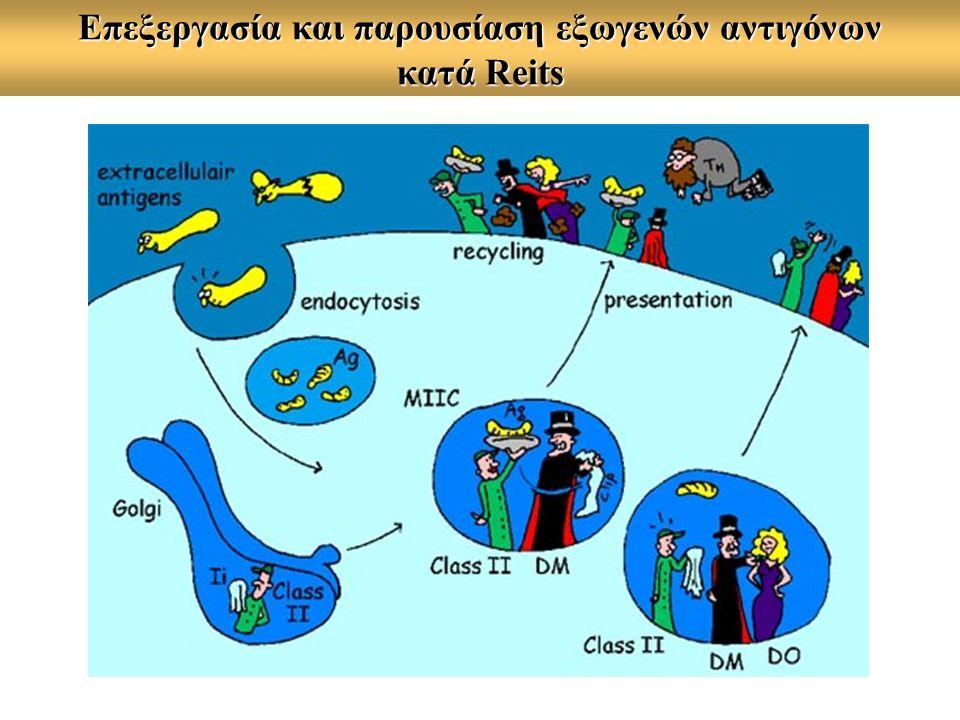 Επεξεργασία και παρουσίαση εξωγενών αντιγόνων κατά Reits