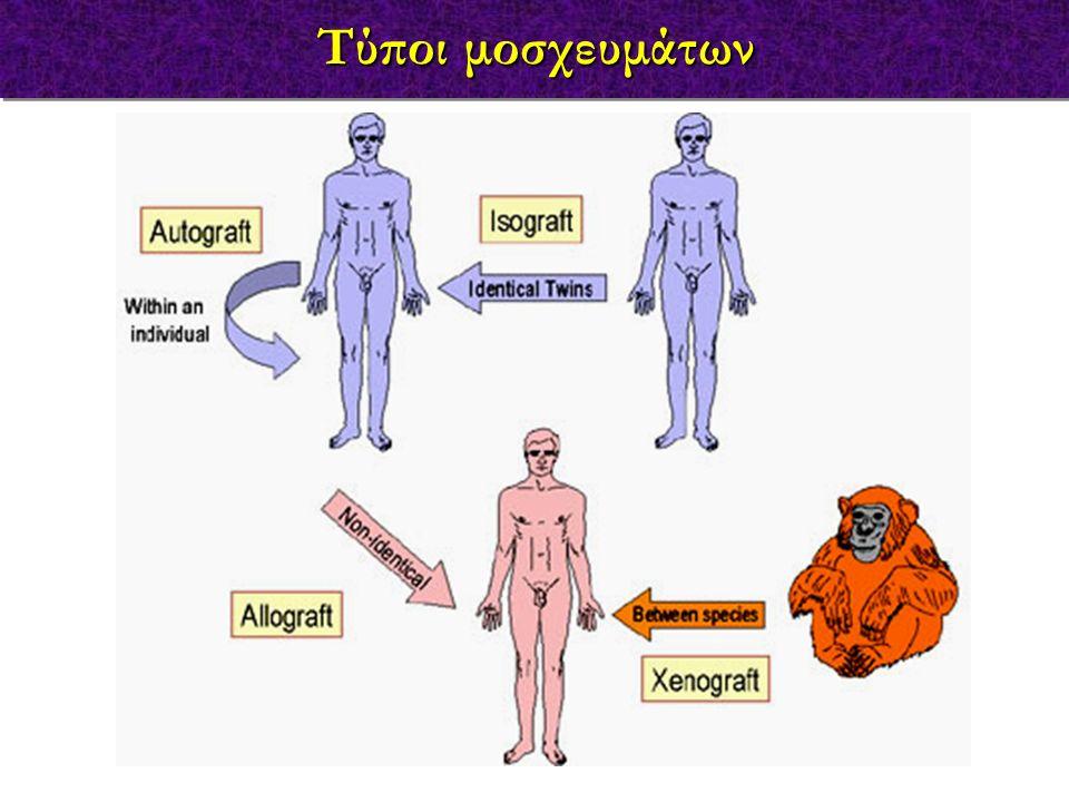 χρωμόσωμα 17 στο ποντίκι Χρωμόσωμα 6 στον άνθρωπο Τα MHC γονίδια στον άνθρωπο
