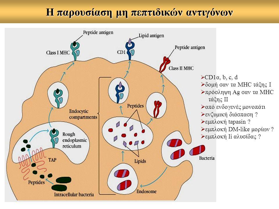 Η παρουσίαση μη πεπτιδικών αντιγόνων  CD1α, b, c, d  δομή σαν τα MHC τάξης Ι  πρόσληψη Ag σαν τα MHC τάξης ΙΙ  από ενδογενές μονοπάτι  ενζυμική δ