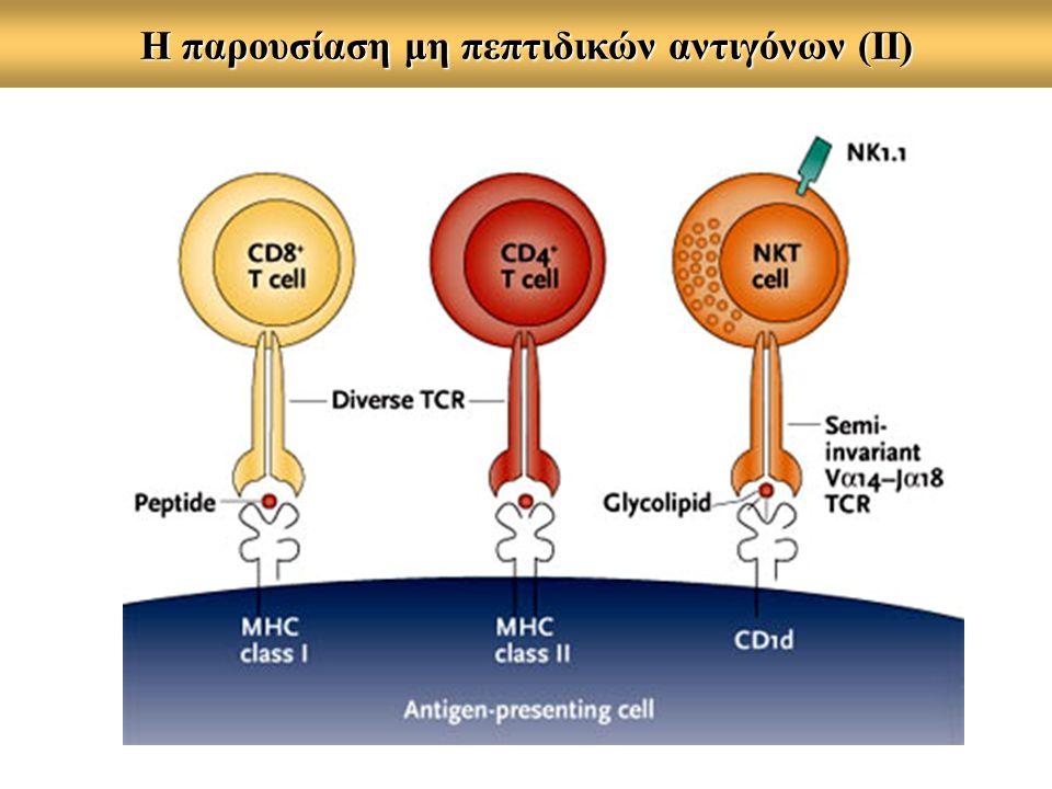 Η παρουσίαση μη πεπτιδικών αντιγόνων (ΙΙ)