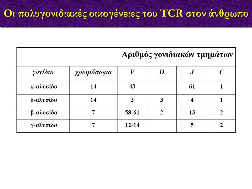 Αριθμός γονιδιακών τμημάτων γονίδιοχρωμόσωμαVDJC α-αλυσίδα1443611 δ-αλυσίδα143341 β-αλυσίδα758-612132 γ-αλυσίδα712-1452 Οι πολυγονιδιακές οικογένειες