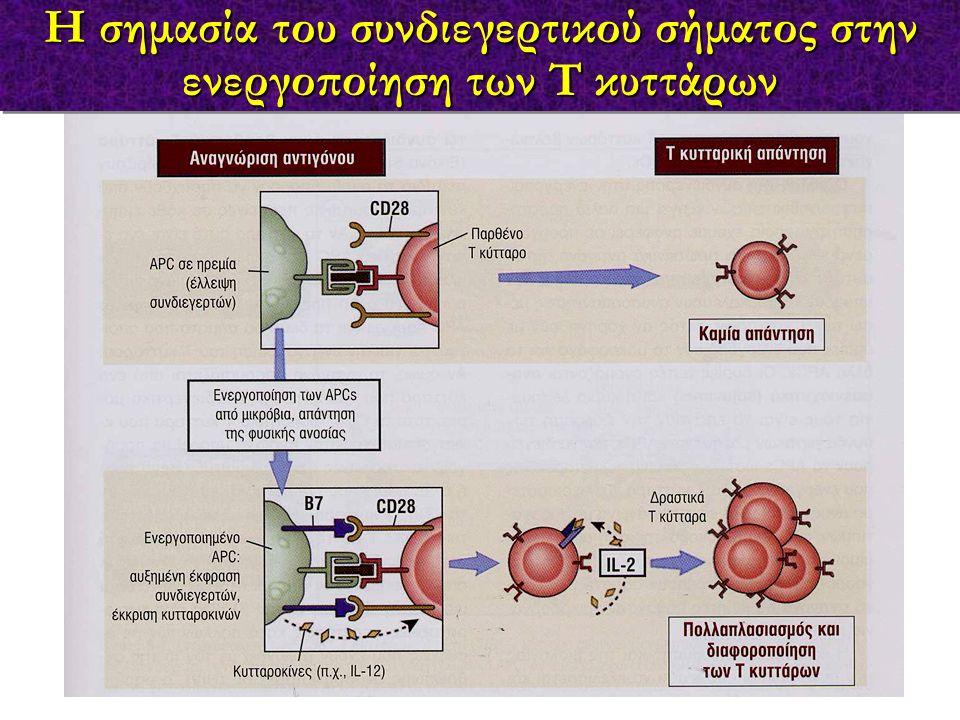 Η σημασία του συνδιεγερτικού σήματος στην ενεργοποίηση των Τ κυττάρων