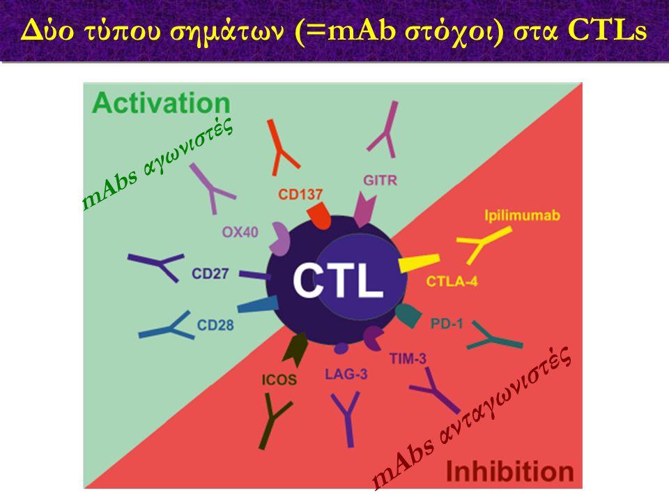 Δύο τύπου σημάτων (=mAb στόχοι) στα CTLs mAbs αγωνιστές mAbs ανταγωνιστές