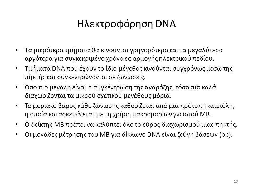 Ηλεκτροφόρηση DNA Τα μικρότερα τμήματα θα κινούνται γρηγορότερα και τα μεγαλύτερα αργότερα για συγκεκριμένο χρόνο εφαρμογής ηλεκτρικού πεδίου.