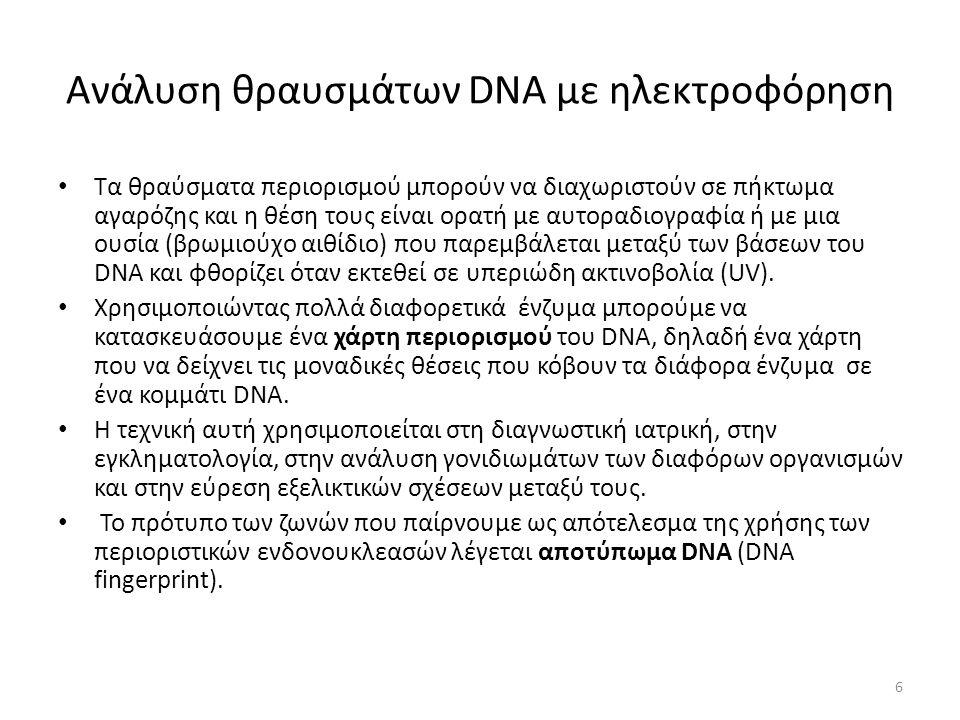 Ανάλυση θραυσμάτων DNA με ηλεκτροφόρηση Τα θραύσματα περιορισμού μπορούν να διαχωριστούν σε πήκτωμα αγαρόζης και η θέση τους είναι ορατή με αυτοραδιογραφία ή με μια ουσία (βρωμιούχο αιθίδιο) που παρεμβάλεται μεταξύ των βάσεων του DNA και φθορίζει όταν εκτεθεί σε υπεριώδη ακτινοβολία (UV).