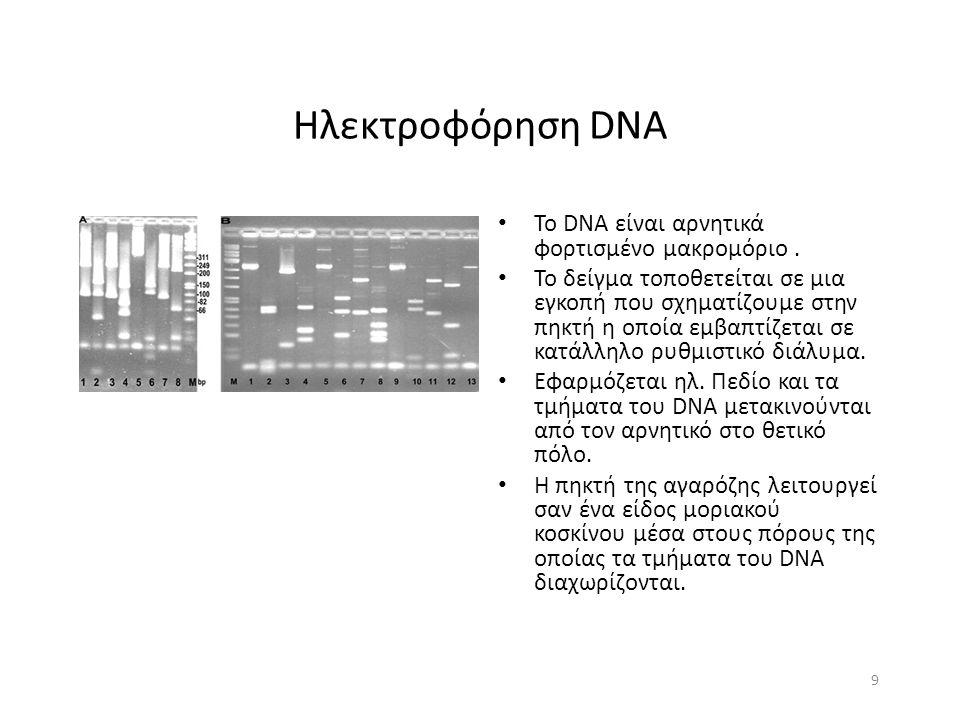 Ηλεκτροφόρηση DNA 9 To DNA είναι αρνητικά φορτισμένο μακρομόριο.