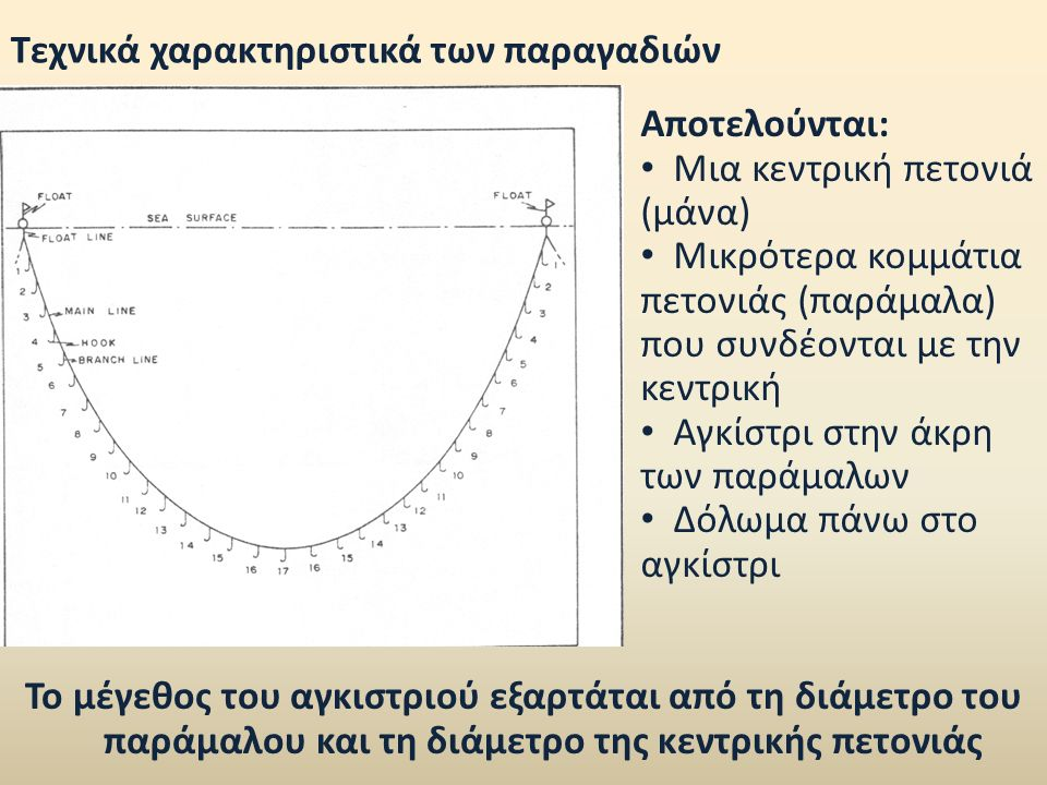 Παραγάδια βυθού Τοποθετούνται στο βυθό, όπου καθηλώνονται με βαρίδια Κυρίως για την αλιεία των εμπορικών ειδών των βενθοπελαγικών ψαριών (φαγκριά, λυθρίνια, σαργούς, ροφούς, μπαλάδες) Το είδος-στόχος καθορίζεται: Μέγεθος αγκιστριού Διάμετρο παράμαλου-μάνας Εποχή Βάθος αλιείας Τύπος υποστρώματος