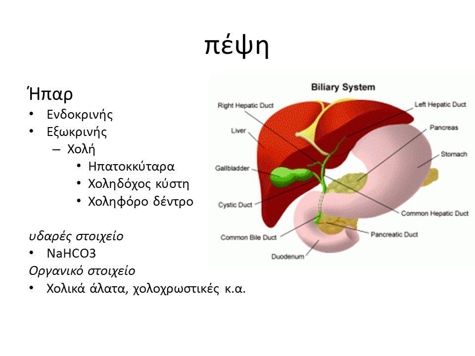 πέψη Ήπαρ Ενδοκρινής Εξωκρινής – Χολή Ηπατοκκύταρα Χοληδόχος κύστη Χοληφόρο δέντρο υδαρές στοιχείο NaHCO3 Οργανικό στοιχείο Χολικά άλατα, χολοχρωστικέ