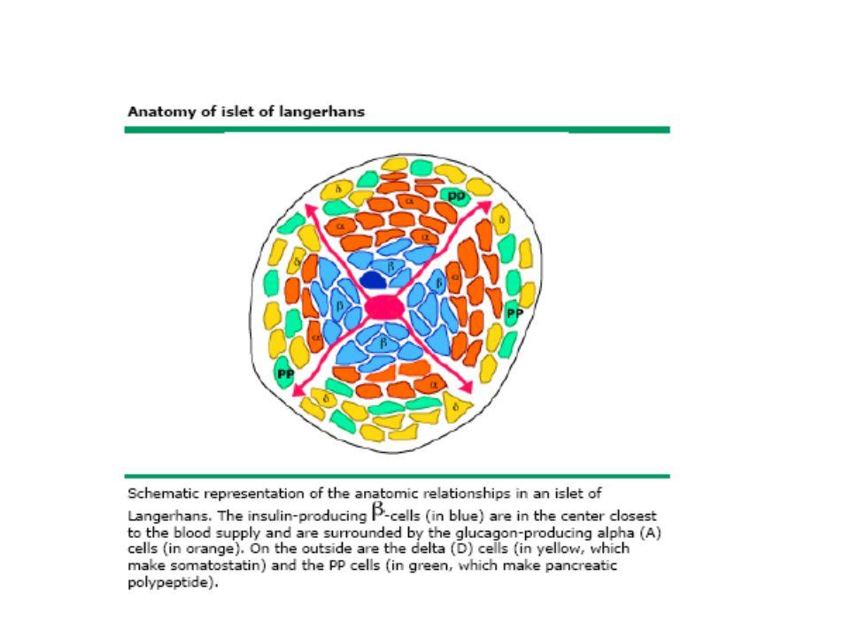 Αιτίες μεταγευματικής υπογλυκαιμίας Βαριατρική χειρουργική επέμβαση Εσκεμμένη υπογλυκαιμία από ινσουλίνη η υπογλυκαιμικά δισκία Αυτοάνοσος υπογλυκαιμία από αντισώματα έναντι ινσουλίνης Ινσουλίνωμα Σύνδρομο παγκρεατογενούς υπογλυκαιμίας χωρίς ινσουλίνωμα Υπογλυκαιμία από Gin και Tonic Γαλακτοζαιμία Κληρονομική μη ανοχή στη φρουκτόζη Μεταμόσχευση παγκρέατος Δηλητηρίαση από Aκee fruit
