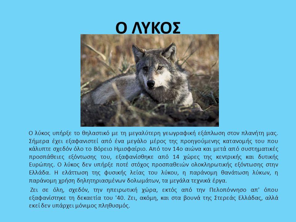 Ο ΛΥΚΟΣ Ο λύκος υπήρξε το θηλαστικό με τη μεγαλύτερη γεωγραφική εξάπλωση στον πλανήτη μας. Σήμερα έχει εξαφανιστεί από ένα μεγάλο μέρος της προηγούμεν