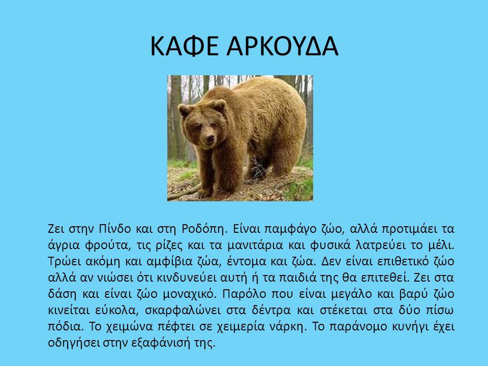 ΚΑΦΕ ΑΡΚΟΥΔΑ Ζει στην Πίνδο και στη Ροδόπη. Είναι παμφάγο ζώο, αλλά προτιμάει τα άγρια φρούτα, τις ρίζες και τα μανιτάρια και φυσικά λατρεύει το μέλι.