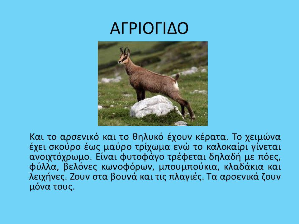 ΒΙΔΡΑ Συναντάται στην Κεντρική Ελλάδα, στην Κέρκυρα και στην Εύβοια.
