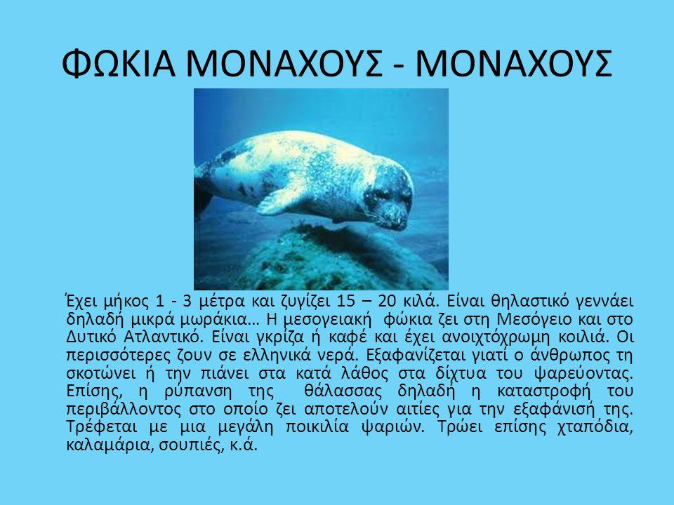 ΦΩΚΙΑ ΜΟΝΑΧΟΥΣ - ΜΟΝΑΧΟΥΣ Έχει μήκος 1 - 3 μέτρα και ζυγίζει 15 – 20 κιλά. Είναι θηλαστικό γεννάει δηλαδή μικρά μωράκια… Η μεσογειακή φώκια ζει στη Με