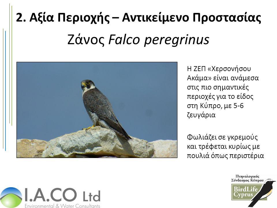 Ζάνος Falco peregrinus Η ΖΕΠ «Χερσονήσου Ακάμα» είναι ανάμεσα στις πιο σημαντικές περιοχές για το είδος στη Κύπρο, με 5-6 ζευγάρια Φωλιάζει σε γκρεμούς και τρέφεται κυρίως με πουλιά όπως περιστέρια 2.
