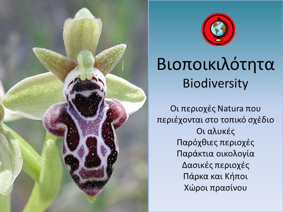 Βιοποικιλότητα Biodiversity Οι περιοχές Natura που περιέχονται στο τοπικό σχέδιο Οι αλυκές Παρόχθιες περιοχές Παράκτια οικολογία Δασικές περιοχές Πάρκ