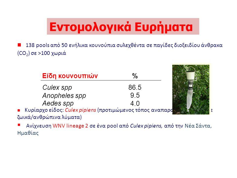 138 pools από 50 ενήλικα κουνούπια συλεχθέντα σε παγίδες διοξειδίου άνθρακα (CO 2 ) σε >100 χωριά Κυρίαρχο είδος: Culex pipiens (προτιμώμενος τόπος αναπαραγωγής = νερό με ζωικά/ανθρώπινα λύματα)  Ανίχνευση WNV lineage 2 σε ένα pool από Culex pipiens, από την Νέα Σάντα, Ημαθίας Εντομολογικά Ευρήματα Είδη κουνουπιών % Culex spp Anopheles spp Aedes spp 86.5 9.5 4.0