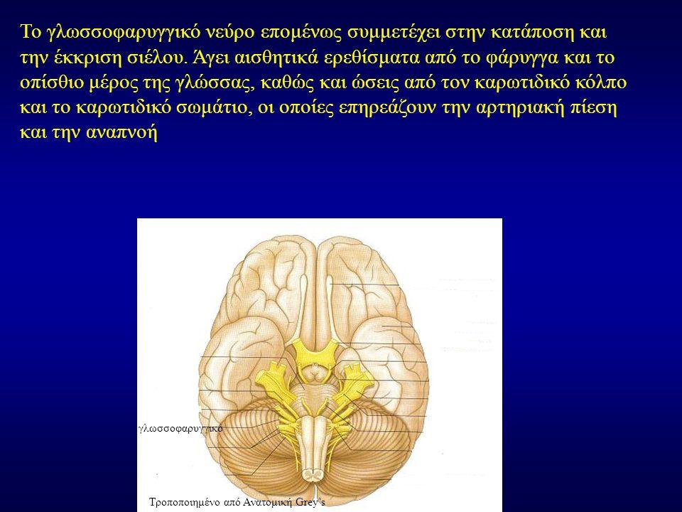 Το γλωσσοφαρυγγικό νεύρο επομένως συμμετέχει στην κατάποση και την έκκριση σιέλου. Άγει αισθητικά ερεθίσματα από το φάρυγγα και το οπίσθιο μέρος της γ