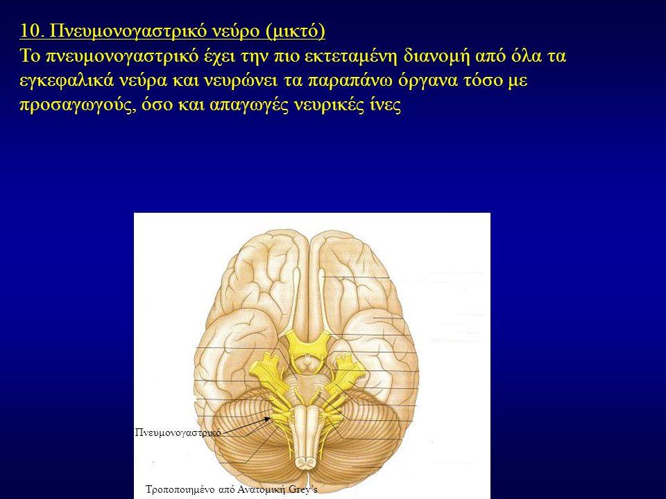 10. Πνευμονογαστρικό νεύρο (μικτό) Το πνευμονογαστρικό έχει την πιο εκτεταμένη διανομή από όλα τα εγκεφαλικά νεύρα και νευρώνει τα παραπάνω όργανα τόσ