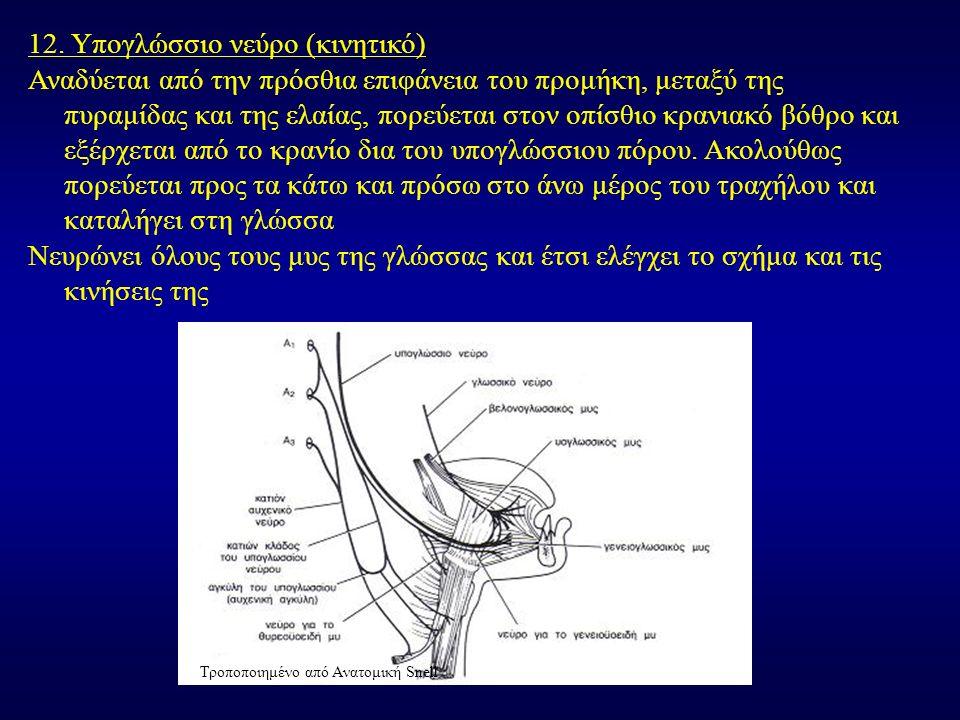 12. Υπογλώσσιο νεύρο (κινητικό) Αναδύεται από την πρόσθια επιφάνεια του προμήκη, μεταξύ της πυραμίδας και της ελαίας, πορεύεται στον οπίσθιο κρανιακό