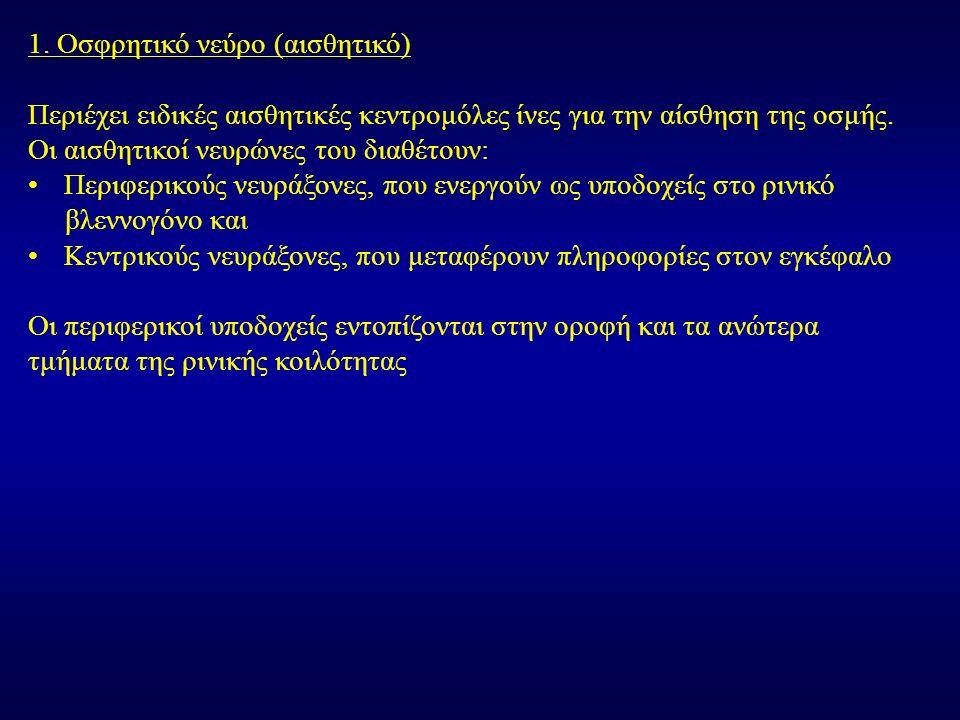 α.Το οφθαλμικό νεύρο (1 ος κλάδος του τριδύμου, V1): Είναι αμιγώς αισθητικό.