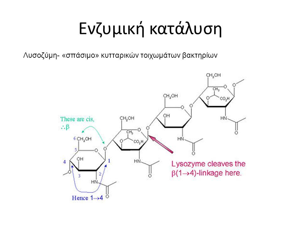 Ενζυμική κατάλυση Λυσοζύμη- «σπάσιμο» κυτταρικών τοιχωμάτων βακτηρίων