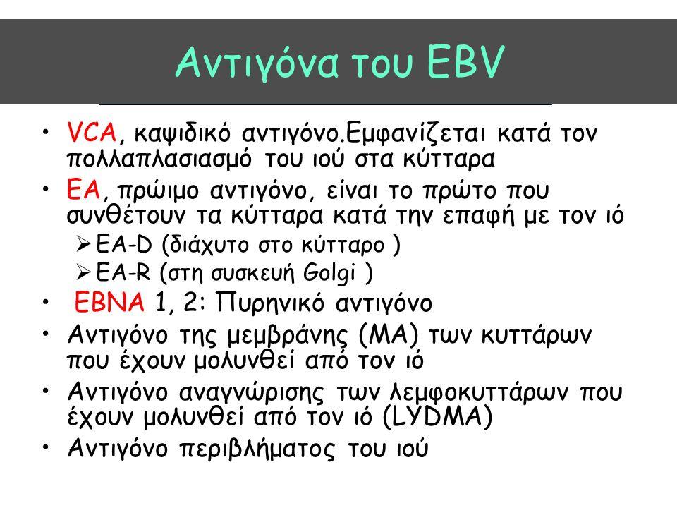 Aντιγόνα του EBV VCA, καψιδικό αντιγόνο.Εμφανίζεται κατά τον πολλαπλασιασμό του ιού στα κύτταρα ΕΑ, πρώιμο αντιγόνο, είναι το πρώτο που συνθέτουν τα κύτταρα κατά την επαφή με τον ιό  EA-D (διάχυτο στο κύτταρο )  ΕΑ-R (στη συσκευή Golgi ) ΕΒΝΑ 1, 2: Πυρηνικό αντιγόνο Αντιγόνο της μεμβράνης (MA) των κυττάρων που έχουν μολυνθεί από τον ιό Αντιγόνο αναγνώρισης των λεμφοκυττάρων που έχουν μολυνθεί από τον ιό (LYDMA) Αντιγόνο περιβλήματος του ιού