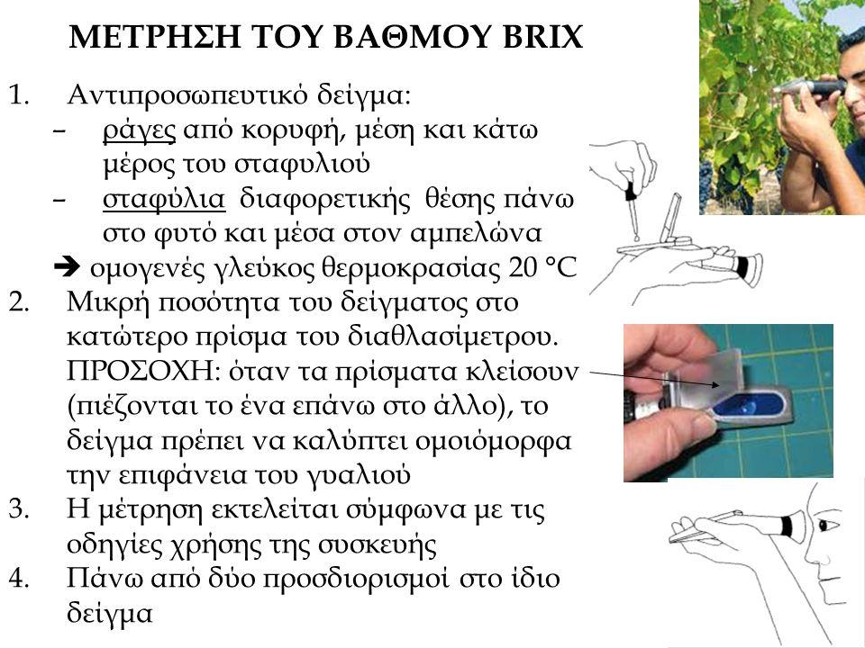 ΜΕΤΡΗΣΗ ΤΟΥ ΒΑΘΜΟΥ BRIX 1.Αντιπροσωπευτικό δείγμα: –ράγες από κορυφή, μέση και κάτω μέρος του σταφυλιού –σταφύλια διαφορετικής θέσης πάνω στο φυτό και