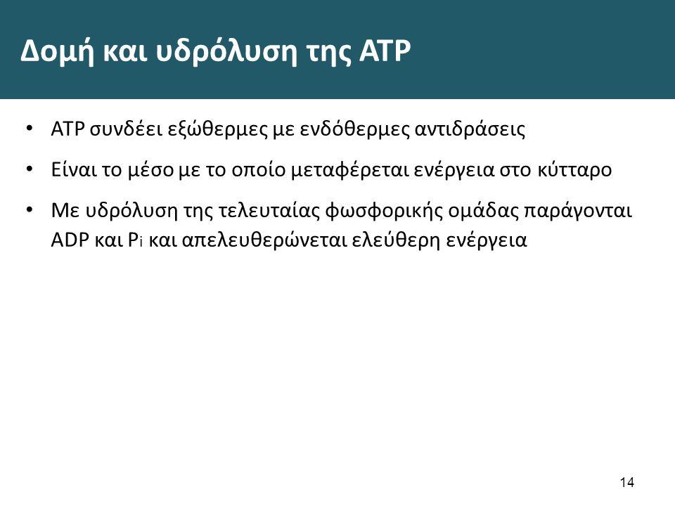 Δομή και υδρόλυση της ATP ATP συνδέει εξώθερμες με ενδόθερμες αντιδράσεις Είναι το μέσο με το οποίο μεταφέρεται ενέργεια στο κύτταρο Με υδρόλυση της τελευταίας φωσφορικής ομάδας παράγονται ADP και P i και απελευθερώνεται ελεύθερη ενέργεια 14