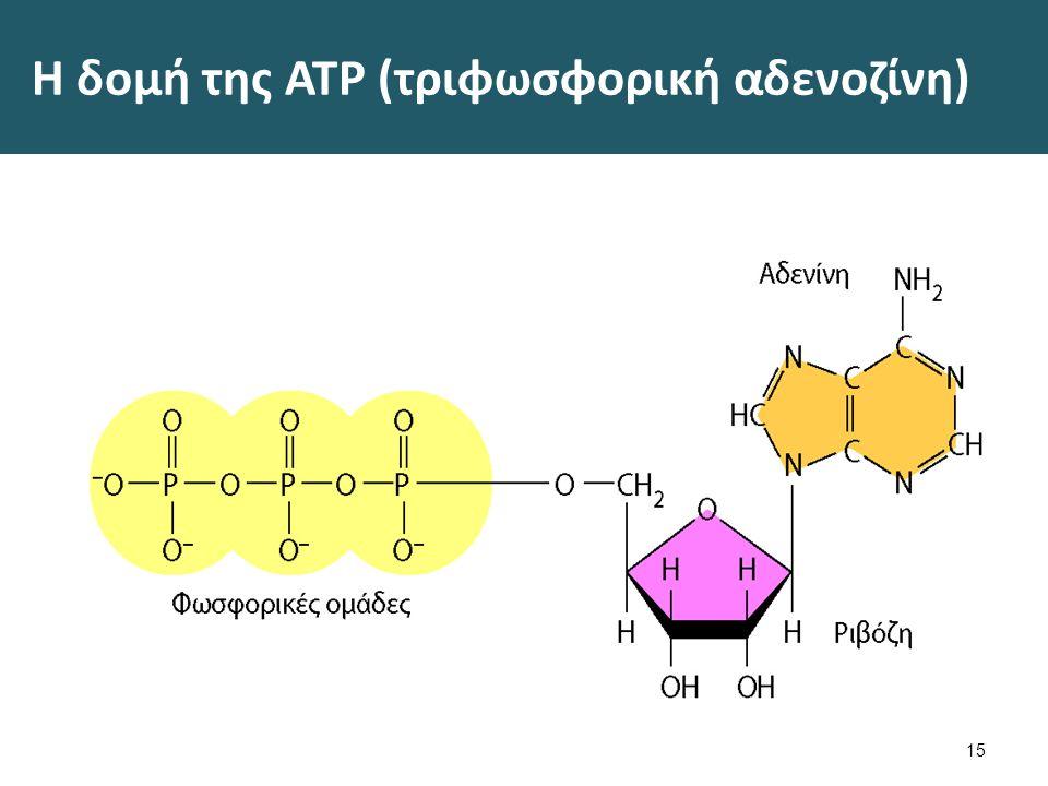 Η δομή της ATP (τριφωσφορική αδενοζίνη) 15