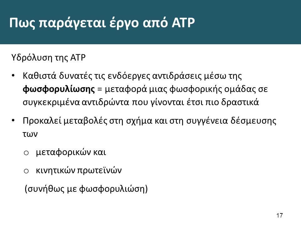 Πως παράγεται έργο από ATP Υδρόλυση της ATP Καθιστά δυνατές τις ενδόεργες αντιδράσεις μέσω της φωσφορυλίωσης = μεταφορά μιας φωσφορικής ομάδας σε συγκεκριμένα αντιδρώντα που γίνονται έτσι πιο δραστικά Προκαλεί μεταβολές στη σχήμα και στη συγγένεια δέσμευσης των o μεταφορικών και o κινητικών πρωτεϊνών (συνήθως με φωσφορυλιώση) 17