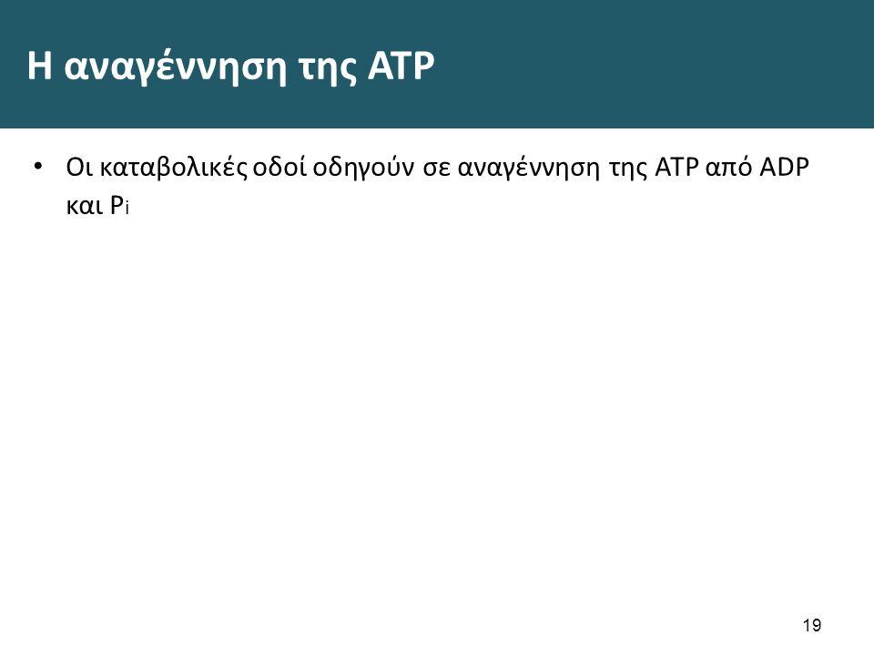 H αναγέννηση της ATP Οι καταβολικές οδοί οδηγούν σε αναγέννηση της ATP από ADP και P i 19